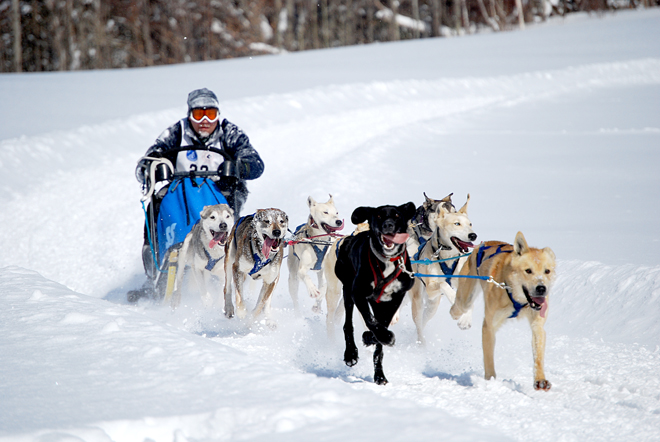 sled_dog_dash